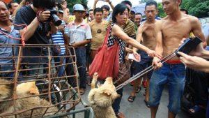Una tradizione da abolire: il Festival della carne di cane a Yulin, in Cina