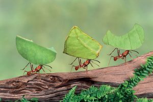 Le formiche, ottime life coach!