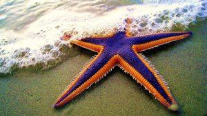 Una stella marina, protagonista di questo aneddoto di life coaching